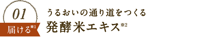 01 うるおいの通り道をつくる発酵米エキス